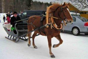 Hevonen Kovelahden raitilla, Kuva: Martti Ahola