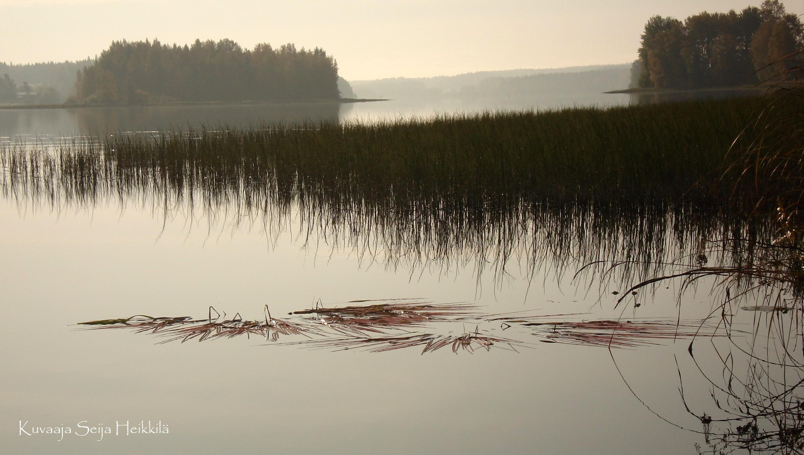 Usvaa Kovelahdessa 2008 (kuva: Seija Heikkilä)