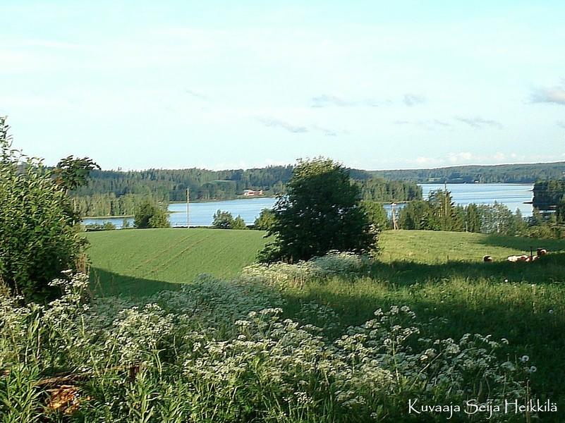 Kesämaisema Kovelahdesta (kuva: Seija Heikkilä)