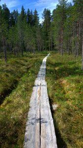 Kuva suon poikki kulkevista pitkospuista