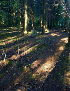 Kuva metsässä sijaitsevalta luontopolulta.