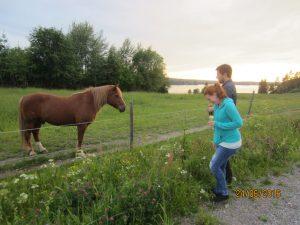 Kaksi ihmistä ihailee hevosta joka on omassa aitauksessaan.