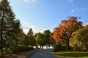 Tie jonka molemmin puolin ovat puut saaneet syksyisen värin lehtiin